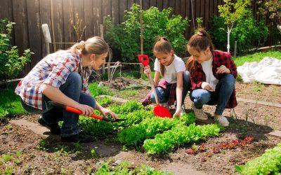 De l'écologie de la formation… à la formation écologique !